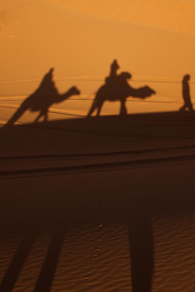 Auf dem Dromedar Rücken durch die Wüste