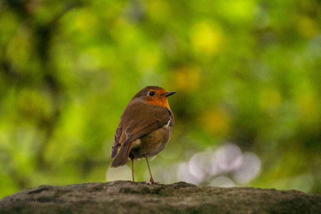 Namenloser Vogel
